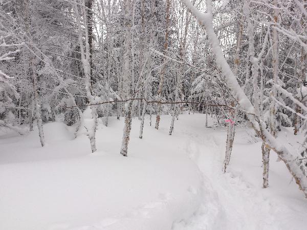 蓼科山樹林帯20130224