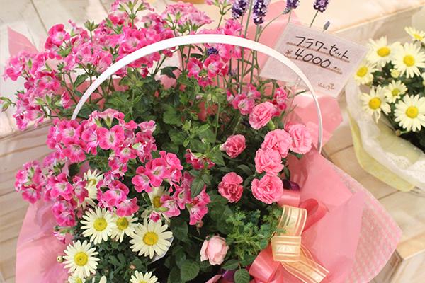 ソレイユ母の日ピンクの寄せ植え