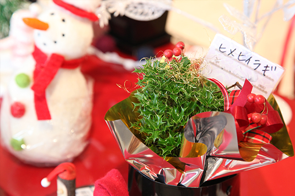 ソレイユ_クリスマス3