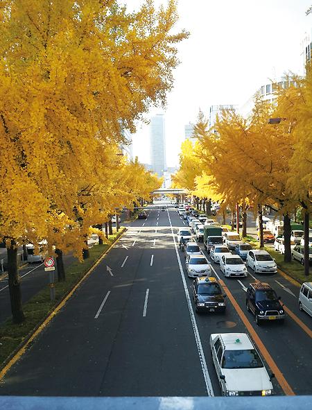 20131203_桜通り02