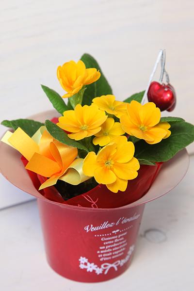 バレンタインの黄色いお花の鉢植え