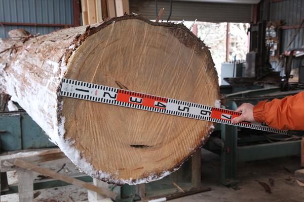 東濃ひのきの大木の大きさ