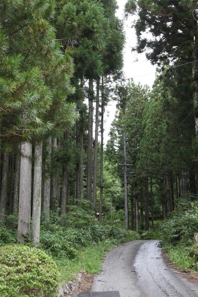木曽の林道